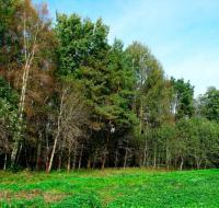 Лесные угодия