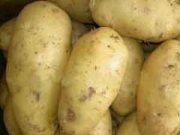 Картофель семенной из Беларуси в Краснодаре