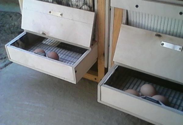 Яйцесборник своими руками фото