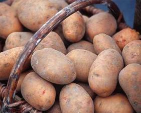 Картофель семенной из Беларуси в Астрахани