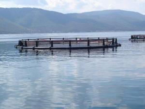 Рыбные фермы: садки(стационарные, погружные, модульные) УЗВ.