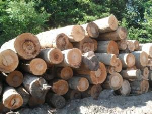 Доска необрезная дуб, бук, ясень, граб, ольха, осина - размеры и объемы любые!!!