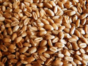 Пшеница 3-й класс (клейковина 25 и выше %)
