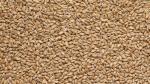 Пшеничный