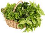 Базилик - свежая зелень Израиль премиум. Оптовые поставки свежей зелени из Израиля
