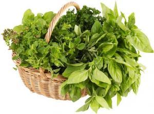 Душица (Орегано) - свежая зелень премуим Израиль. Оптовые поставки свежей зелени из Израиля