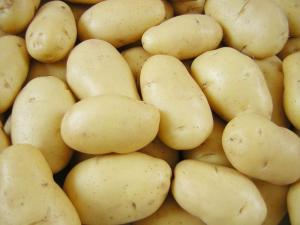 Картофель семенной из Беларуси оптом В Волгограде