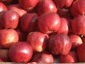 """Яблоки """"Хубони"""""""