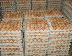 Яйцо купить