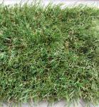 Искусственная трава Тропикана 35