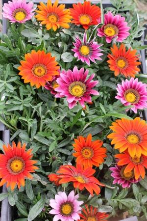 Рассада однолетних цветов фото с названиями 55