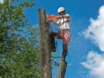 спил, валка, удаление опасных и аварийных деревьев Казань