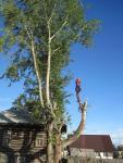 Спил и удаление сложных деревьев