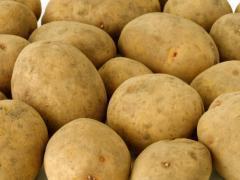 Картофель семенной из Беларуси в Белгороде