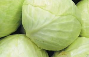 Продам оптом капусту 1,5-3 кг белорусскую от производителя