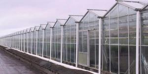 Теплицы и парниковые комплексы для ферм
