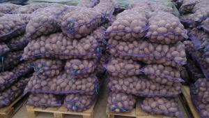 Продажа картофеля, сорта Розария и Гала