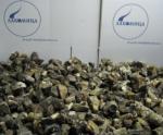 Подосиновик гриб (кубик) замороженный