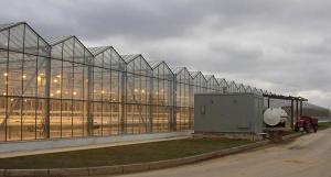 Полная комплектация промышленных голландских теплиц под ключ
