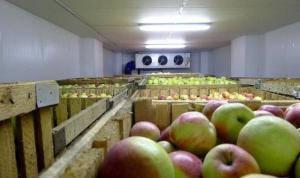 Холодильные установки для длительного хранения фруктов