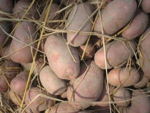 Закупаем овощи и фрукты от 20 тонн