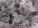 Мох ягель - олений мох, в влажном виде