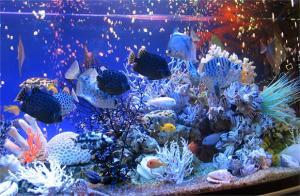 Кварцевый песок для аквариумов.