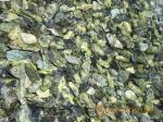 Щебень мраморный, зеленый